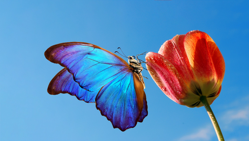 Blooming Flower with Butterfly